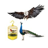 United Kingdom> Pets & Zoostuff> Catalog of products> Pets & Zoostuff wholesale and retail at www.uk.all.biz