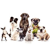 Zoo hotels and services for pets