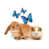 Pets & zoostuff buy wholesale and retail Colombia on Allbiz