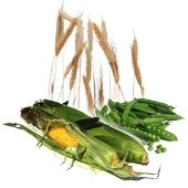 Agricultural buy wholesale and retail Peru on Allbiz
