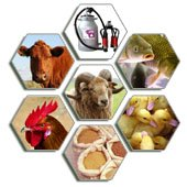 Agricultural buy wholesale and retail Algeria on Allbiz