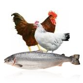 Poultry and fish farming