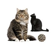 Pakistan> Pets & Zoostuff> Catalog of products> Pets & Zoostuff wholesale and retail at https://pk.all.biz