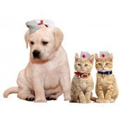 pets & zoostuff in Turkmenistan - Service catalog, order wholesale and retail at https://tm.all.biz