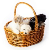 pets & zoostuff in France - Service catalog, order wholesale and retail at https://fr.all.biz